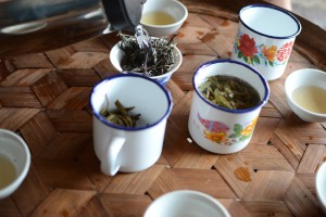 Tea tasting puerh tea
