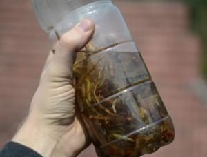 Wasp Liquor