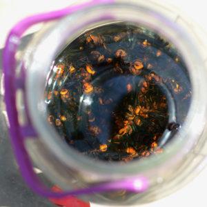 Wasp Moonshine